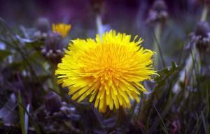 yellow-829209_1280